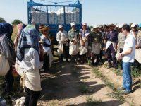 Пахта-2017: «Кечаси 3 да қўнғироқ қилиб, уйга қайтишимизни айтишди»
